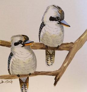 Bela Grof - Kookaburras