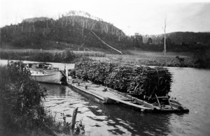 A-rake-of-cane-trucks-on-punt-Maroochy-River-1940s