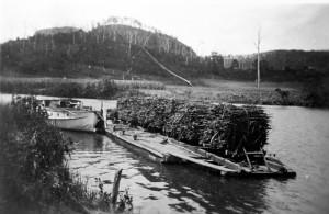 A-rake-of-cane-trucks-on-punt-Maroochy-River-1940s