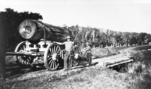 Harry-&-john-Duhs-hauling-timber-Kiamba-1940s