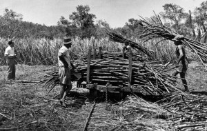 Loading-cane-for-transport-by-loco-1940s