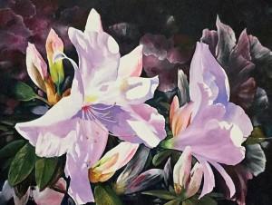 metcalfe-azaleas-I